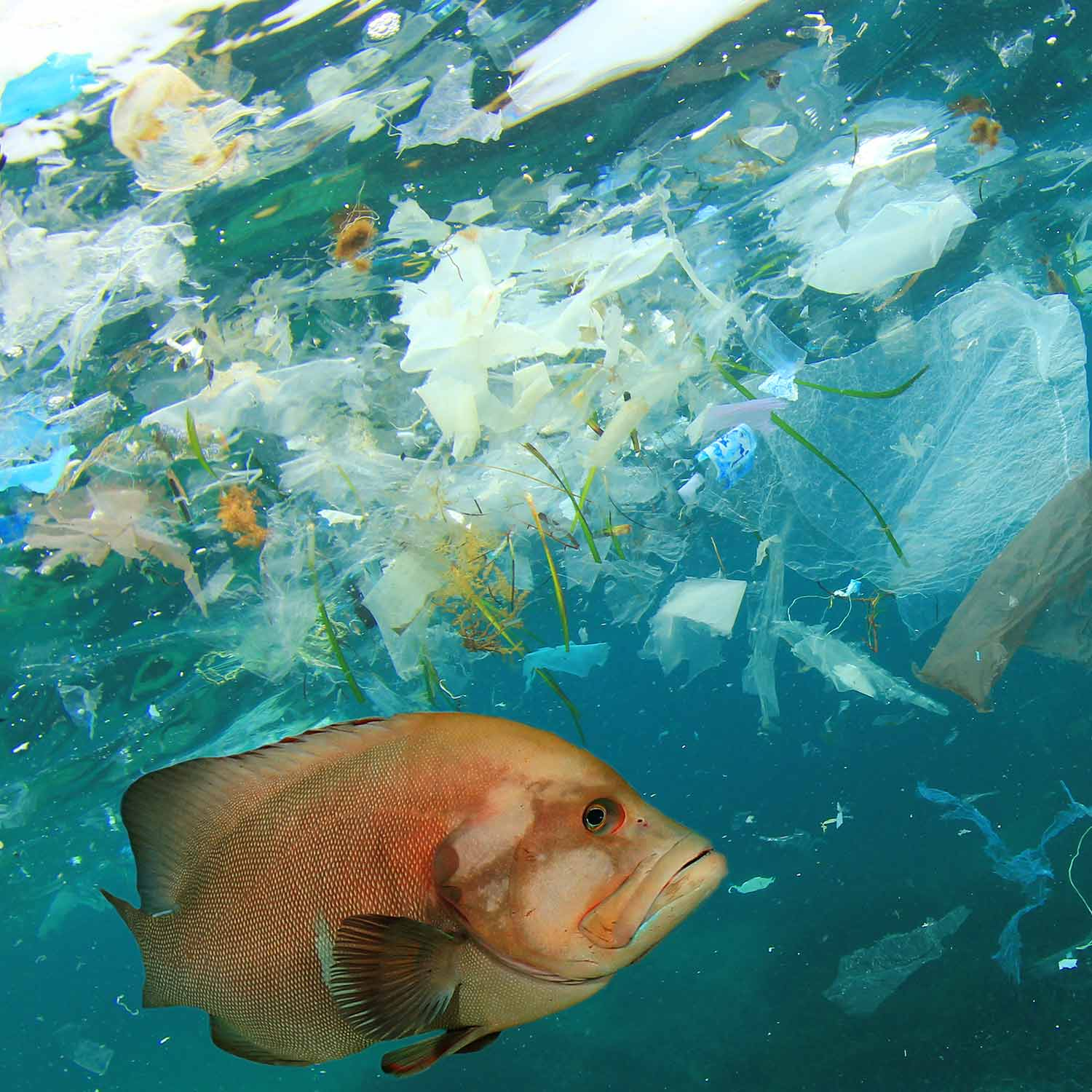 Image of fish in polluted with plastic water